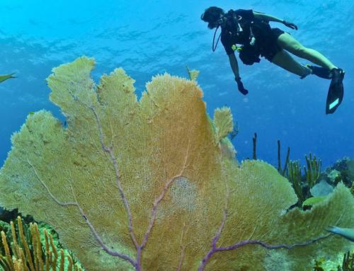How to dive in Maremma
