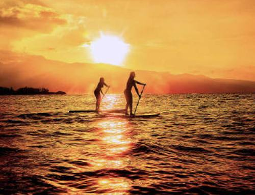 Windsurf, Surf e SUP